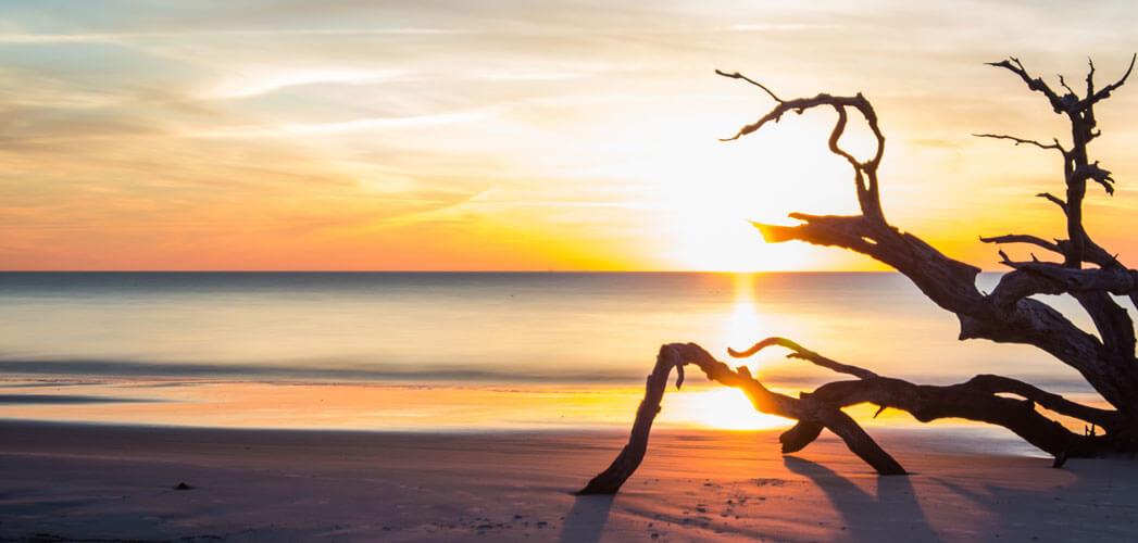 Sea Island Beach Driftwood