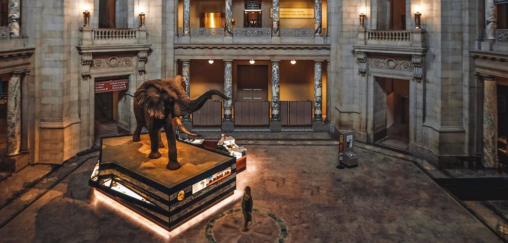 Explore the Smithsonian Museum